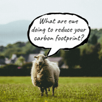 Sheep is Fuming about Carbon Fumes